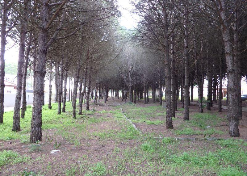01-Parcela-Chiclana-C04264