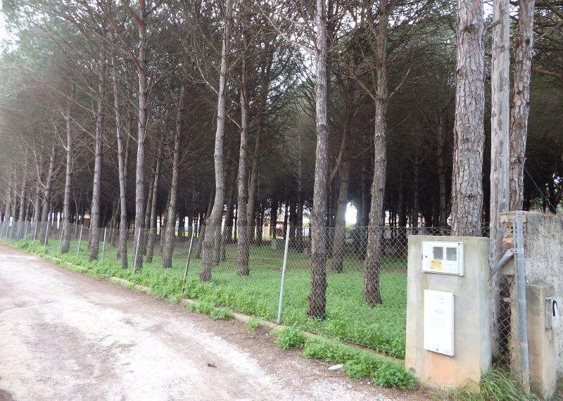 02-Parcela-Chiclana-C04264