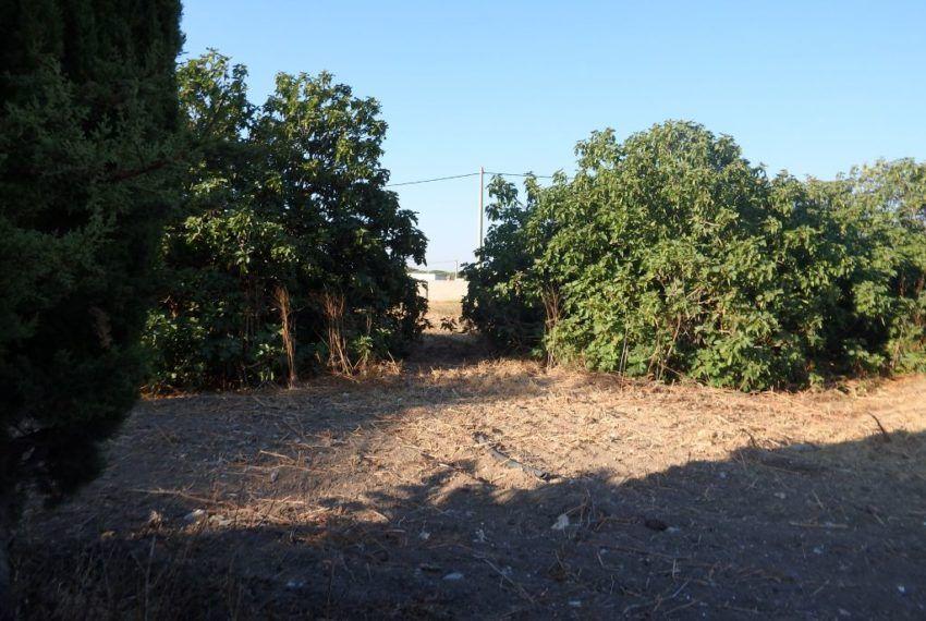 22-Parcela-Chiclana-C04358
