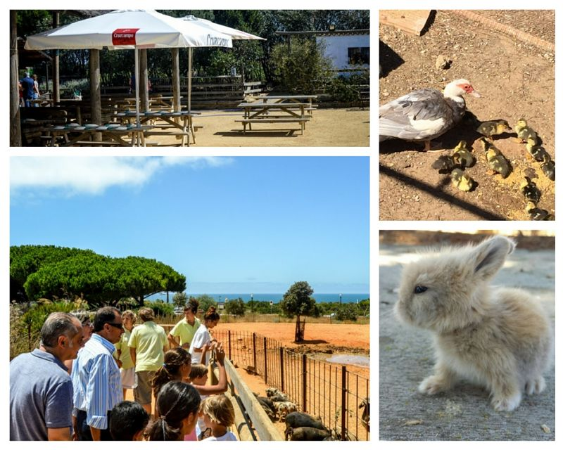 Escuela huerto con animales en Chiclana